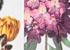 Stella McCartney met les fleurs à l'honneur