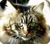 Emmener votre chat en vacances : les précautions à prendre