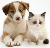 Emmener chien et chat en voyage, c'est possible