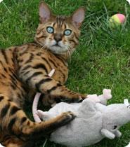 Le Jardin des Chats, hotel luxe pour chats !