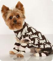 La mode canine en plein essor