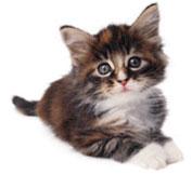 Soins du chaton
