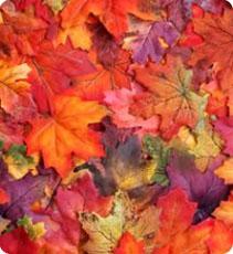 Une belle peau au cœur de l'automne, conseils et astuces