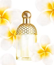 Parfum Tiaré Mimosa Aqua Allegoria