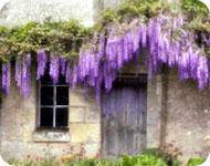 Jardinage : créez votre jardin vertical