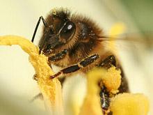 miel, propolis, pollen, gelee royale : les produits de la rûche