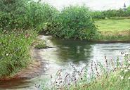 Résidue de medicaments retrouves dans les eaux de riviere
