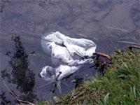 sac plastique dans la nature