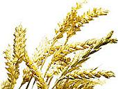 Céréales et nutrition