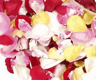 élixirs floraux